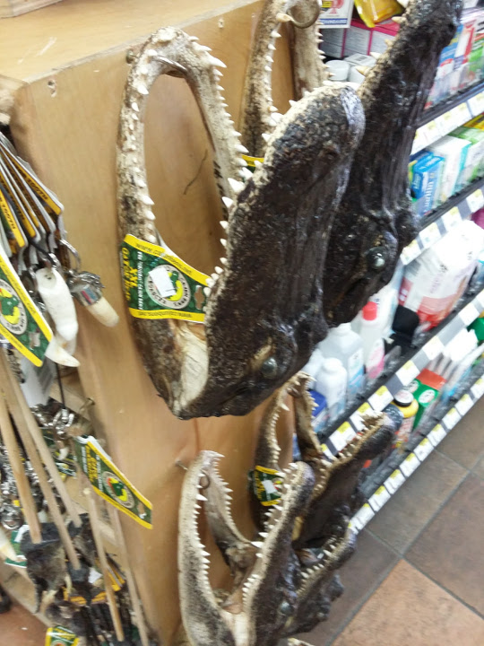 Alligator heads for sale