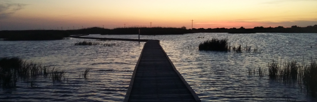 A boardwalk trail across the wetland with sunset in background
