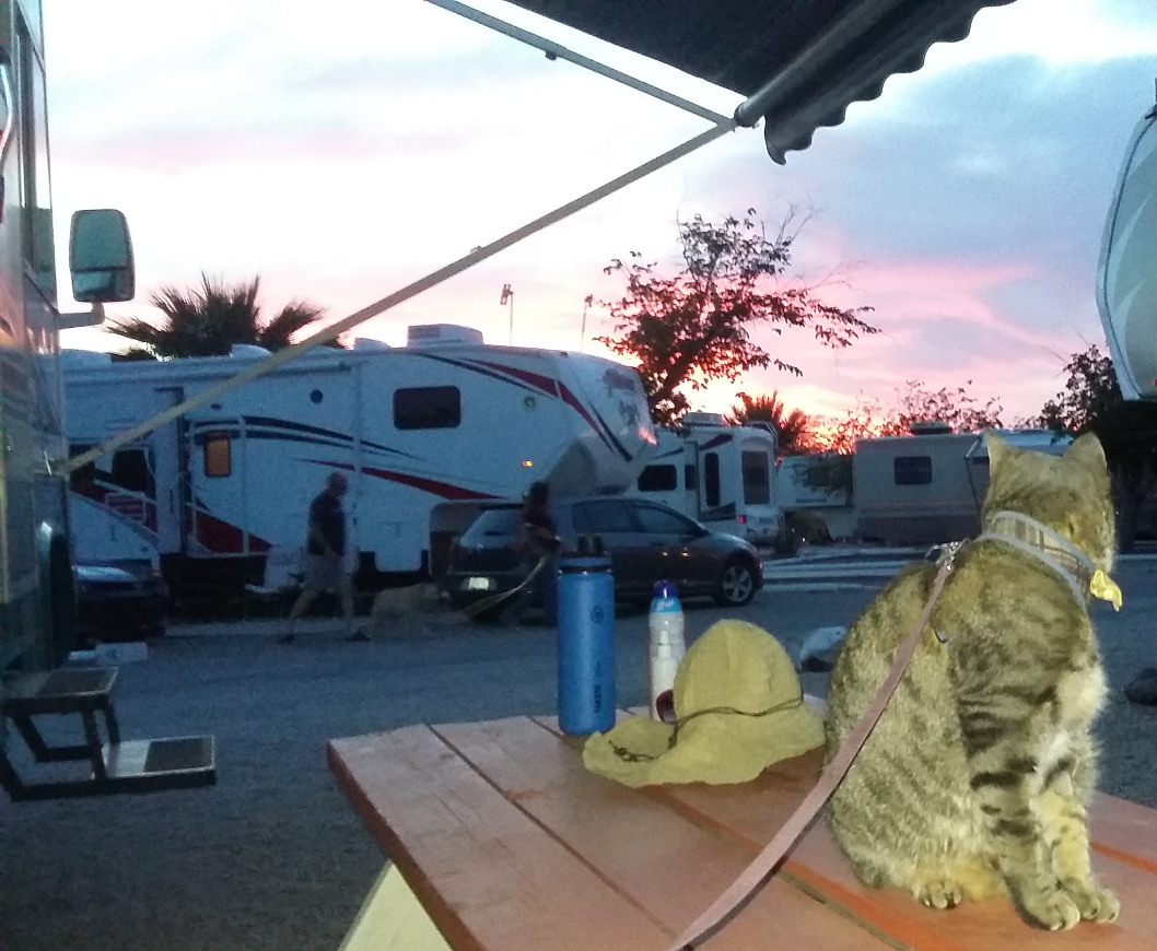 Pablo watches the Tucson sunset