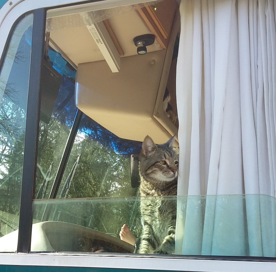 Pablo the cat looks out the window toward back of the RV
