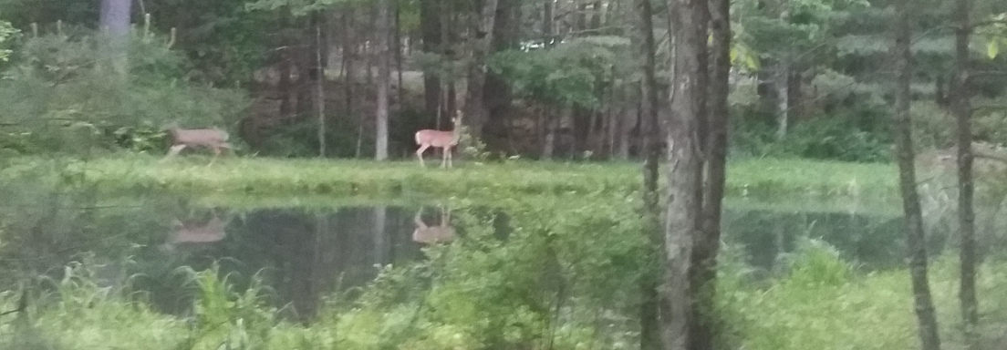 Deer standing on the other side of a pond